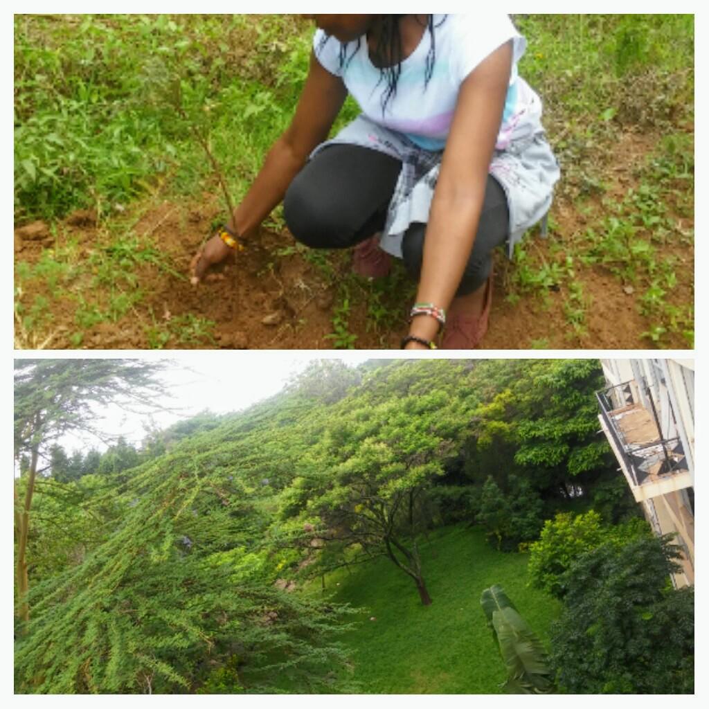 Activities which involve conservation of the environment for clean air and better environment count me in...the photo shown was an activity called for by environmentalists to create a green and conducive atmosphere leading fo