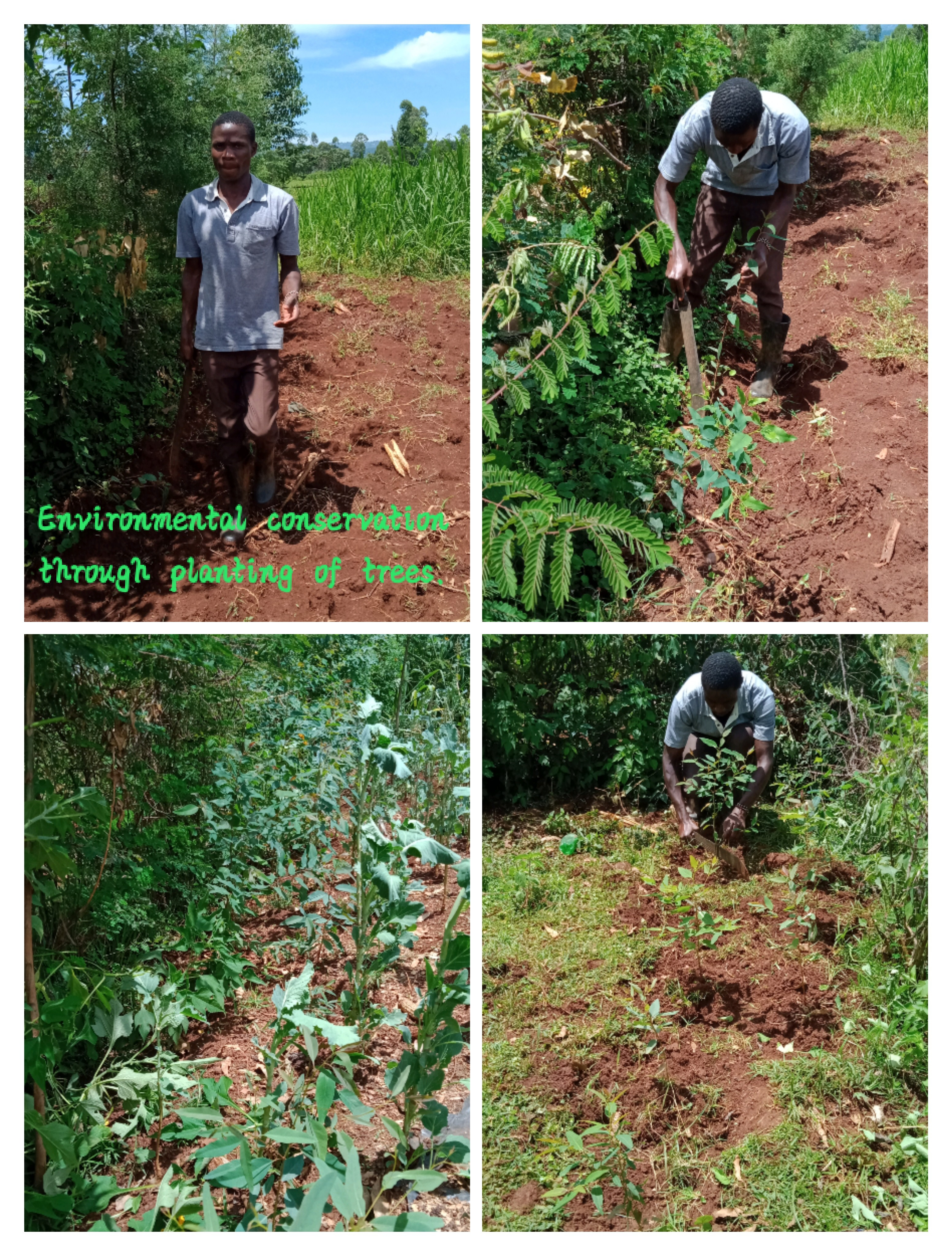 Environmental conservation by planting trees.